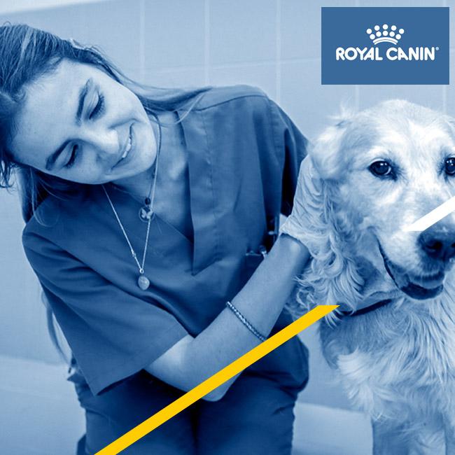 Sesiones online de Royal Canin sobre nutrición