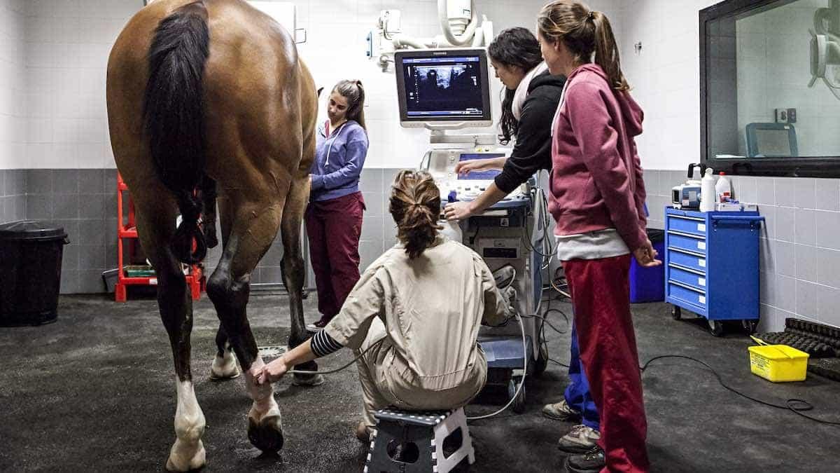 Hospital Universitario  Veterinario de Universidad Alfonso X El Sabio